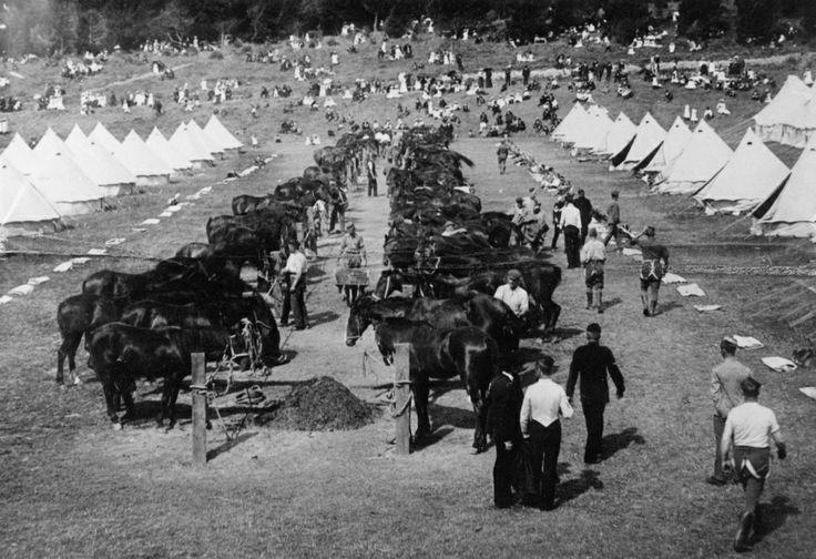 Army; remount depot, World War 1; horses, tents, visitors, 1915. [P3-15-58] | Upper Hutt City Library