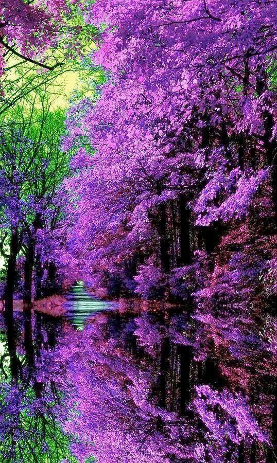 Japanese garden Oh beautiful Purple Pinterest