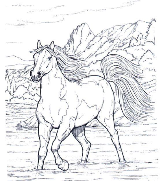Pferde 15 ausmalbilder Mehr
