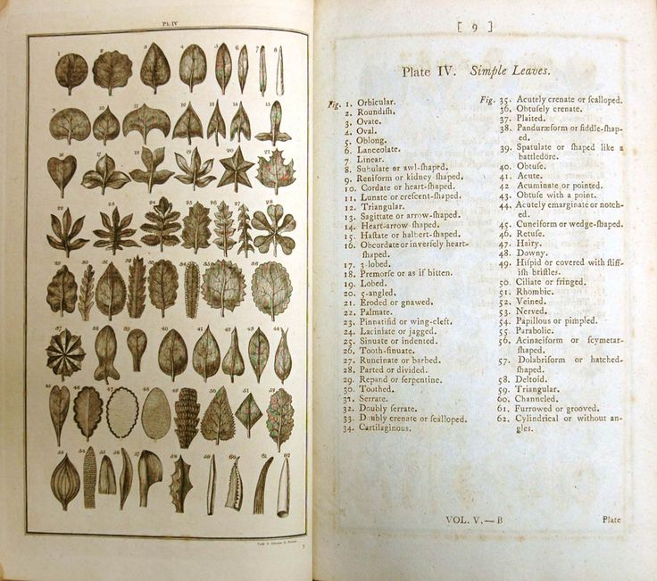 Charles Linnè, A General System of Nature. Vol. V. London: Printed for Lackington, Allen & Co., 1806. DeB Eb 1806 L