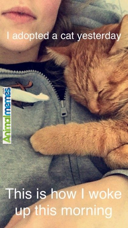 """Cat memes We love each other...  ❤❦♪♫Thanks, Pinterest Pinners, for stopping by, viewing, re-pinning, & following my boards. Have a beautiful day! ^..^ and """"Feel free to share on Pinterest ♡♥♡♥#fashionandclothingblog ❤❦♪♫!♥✿´¯`*•.¸¸✿♥✿´♥✿´¯`*•.¸¸✿♥✿´¯`*•.¸¸✿♥✿"""