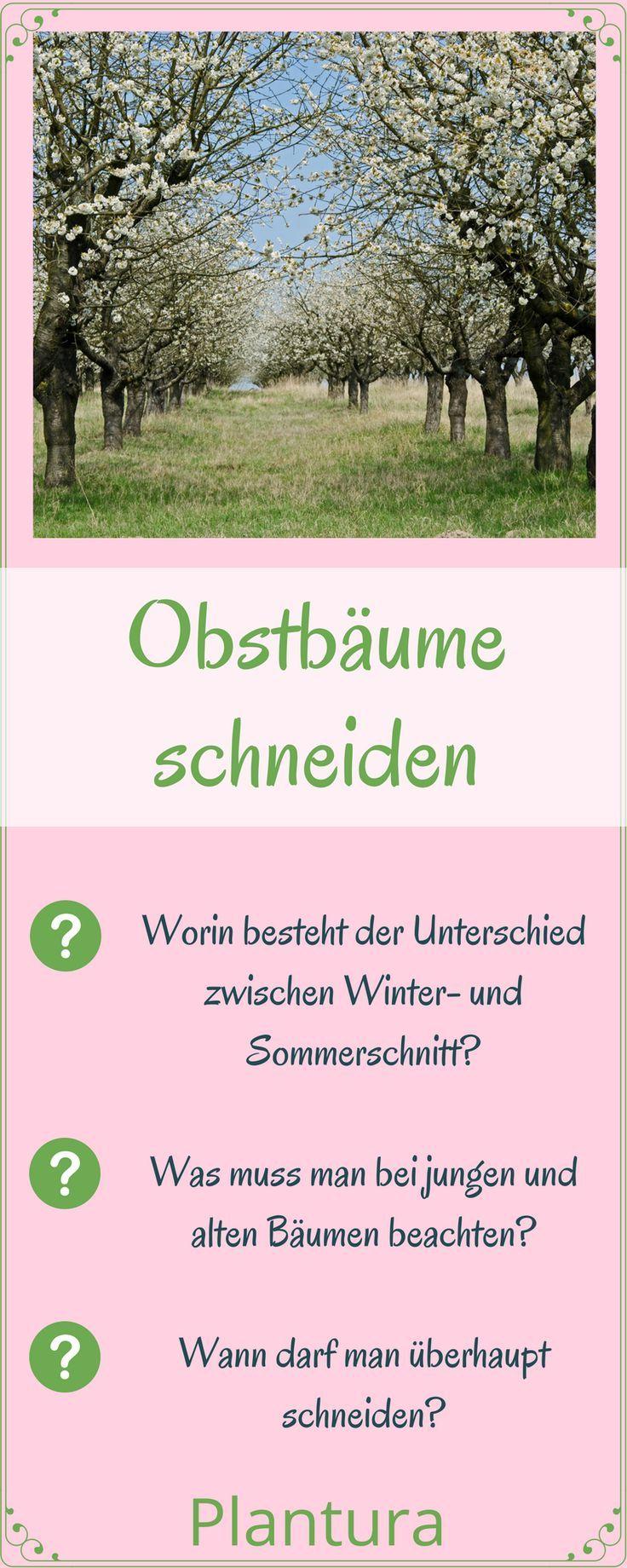 Obstbaume Richtig Schneiden Anleitung Vom Experten Garten Ideen