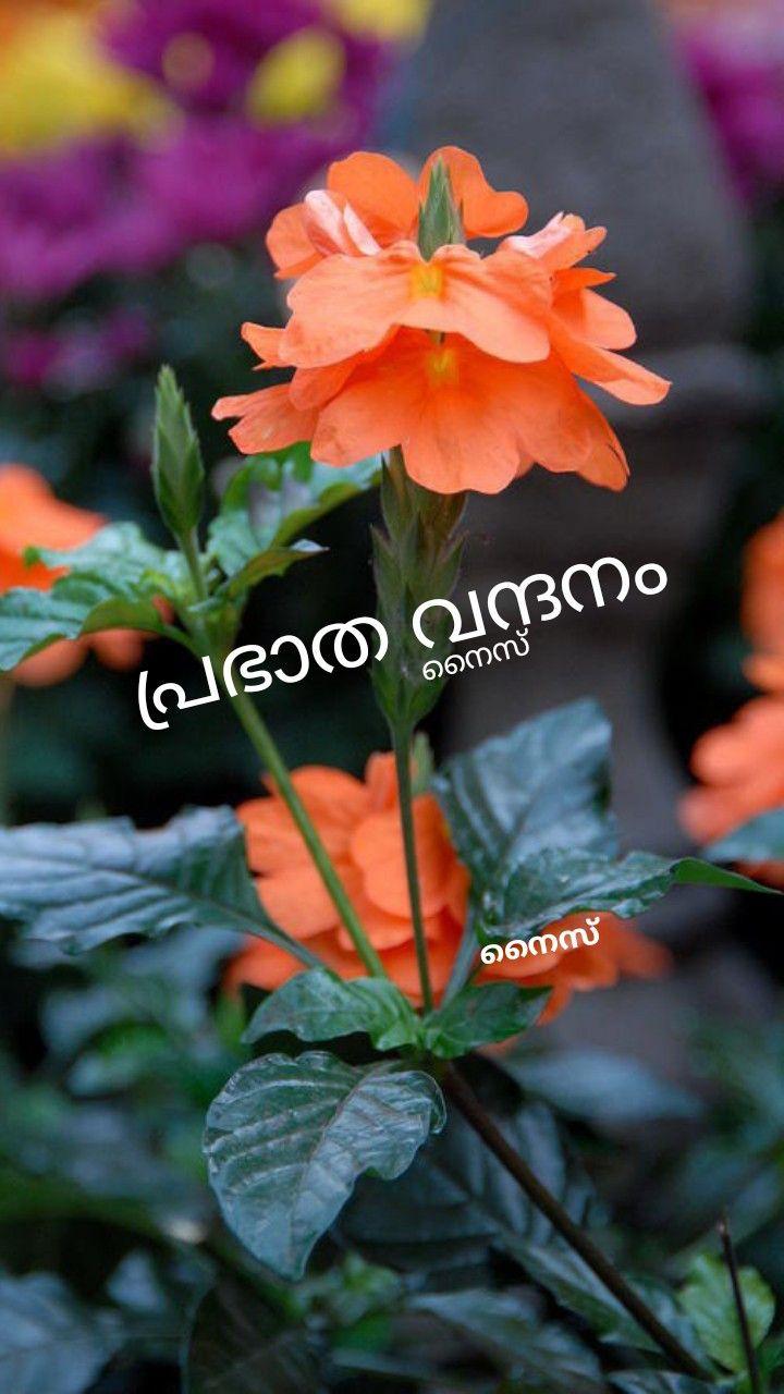 Pin By Sireesha Nair On Good Morning Malayalam Good Morning Wishes Good Morning Beautiful Good Morning