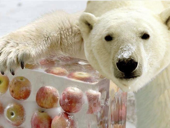 Cute Newborn Polar Bears Cute Panda Eats A Treat Funny