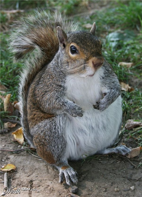 """I eated all the acorns."""