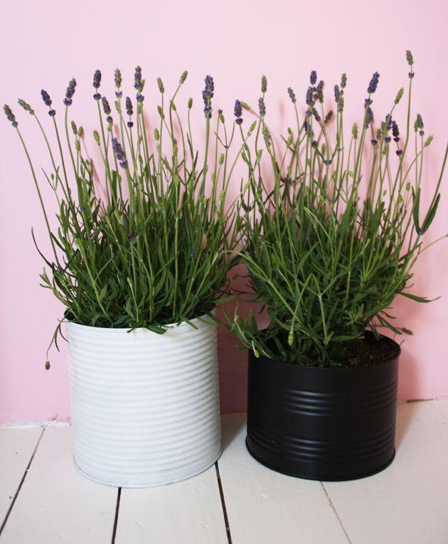 Gezien op Pinterest: geverfde blikken, gebruikt als opbergblikken óf met planten er in.