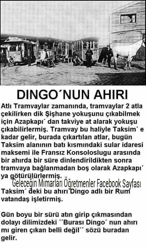 Dingo'nun ahırı