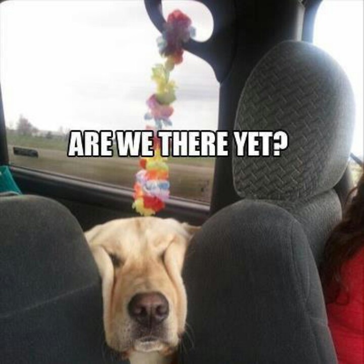 Pin by Gonzalo Cerda on OUR PETS (group board)   Funny animal photos, Funny  animals, Funny dogs