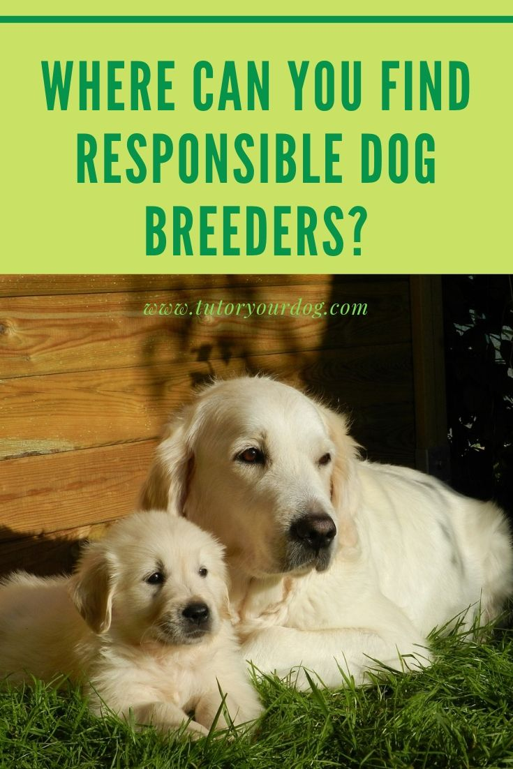 Where Can You Find Responsible Dog Breeders Dogs Online Dog