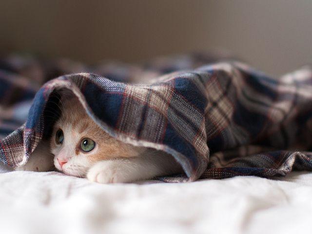 صور قطط جميلة عالية الجودة Hd Kitten Wallpaper Sleepy Kitten Cute Cat Wallpaper