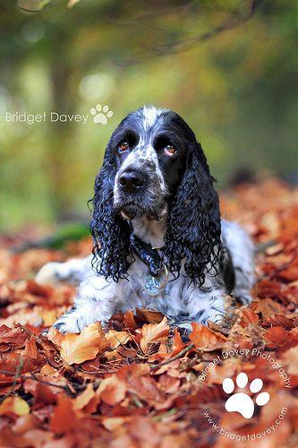 Dexter   Pet Photography Leighton Buzzard, Bedfordshire
