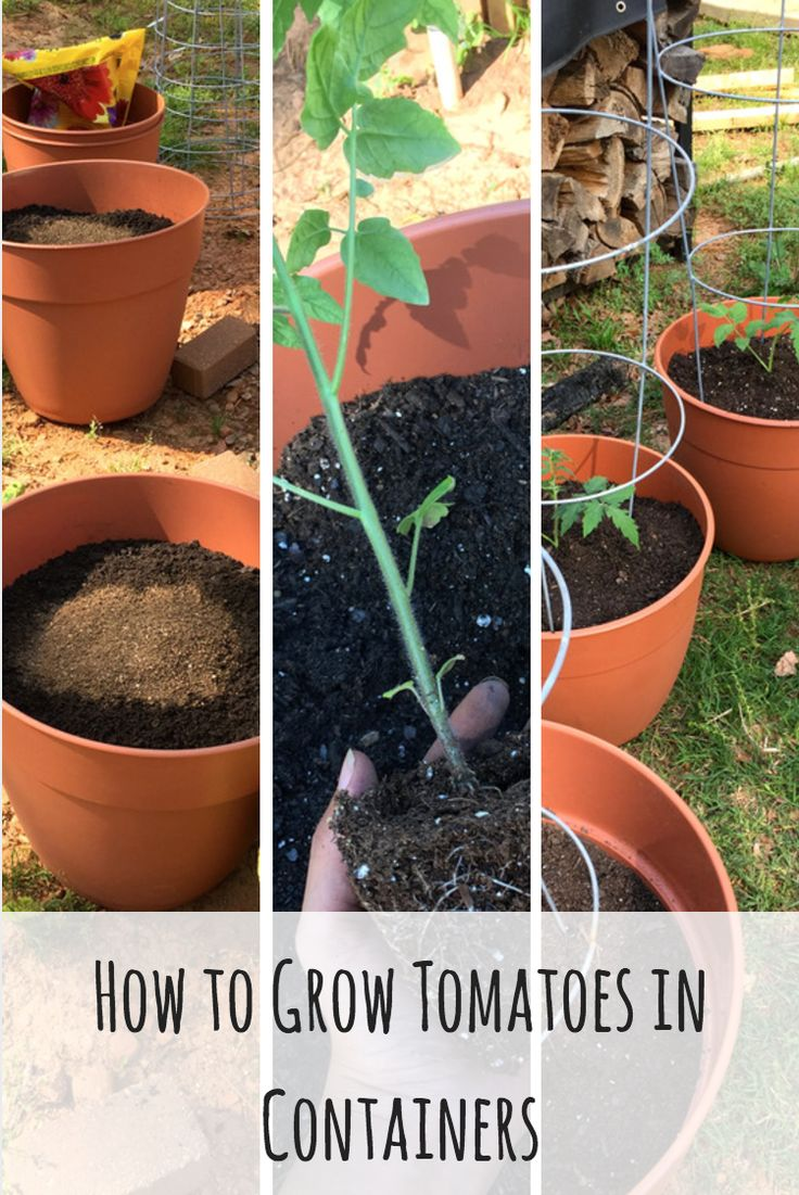 Save the space in your garden beds by keeping unruly tomatoes in containers | Vivi's Garden