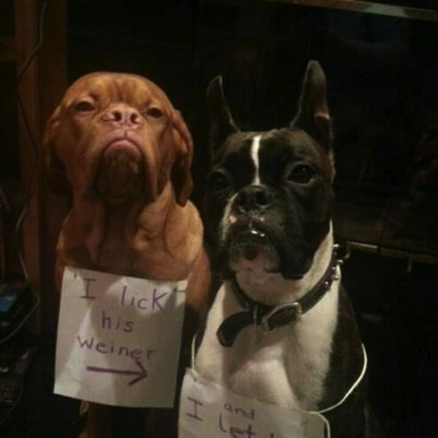 The Best Of Dog Shaming Tickle Under The Chin