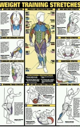 WEIGHT TRAINING STRETCHING WALL CHART Professional Fitness Club Gym Poster