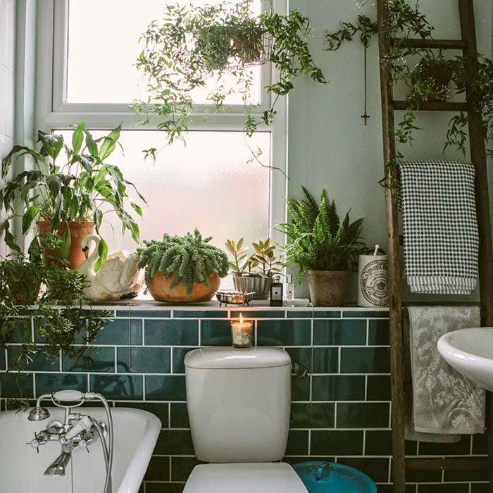 Escalera de madera para colgar toallas en un lavabo lleno de plantas