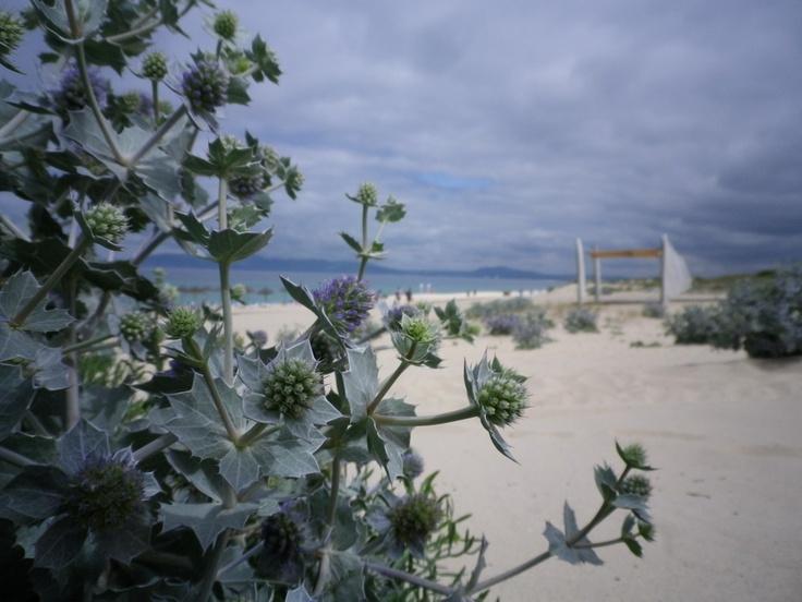 Beach along the Costa Vicentina, Portugal