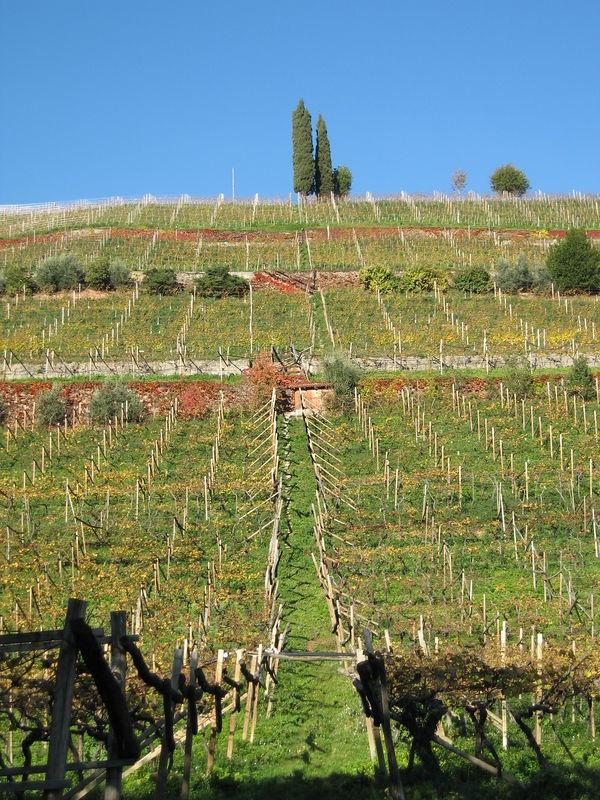 the Cor Romigberg vineyard of Alois Lageder