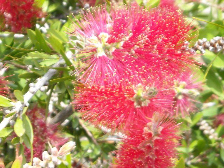 Maggio, Primavera, fiori, odori e colori... May, springtime, flowers, smells and colors...