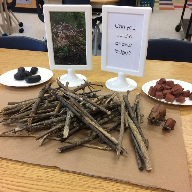 "Provocation, ""Can You Build a Beaver Lodge?"" (from Kimberly Mulholland, Play, Explore, Learn via Instagram: https://www.instagram.com/p/BOYKqqzBQZS/?taken-by=playexplorelearn)"