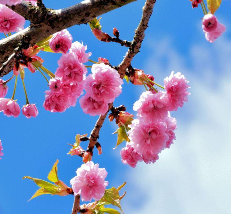 Lezione 3: Come fare fotografie: la magia della primavera