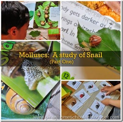The Pinay Homeschooler: Molluscs: The Study of Snails
