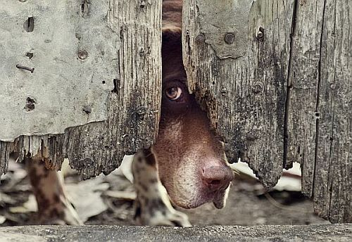 The Dog Welfare Journal: 'Red in Tooth and Claw'