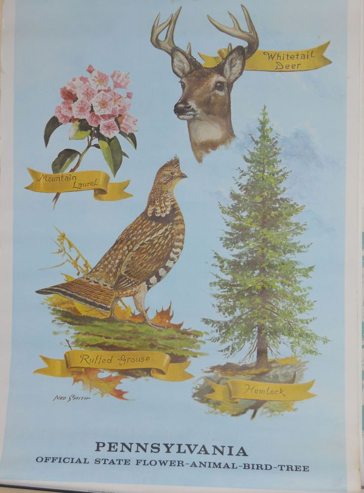 Vintage Ned Smith Signed Pa Official State Bird Flower