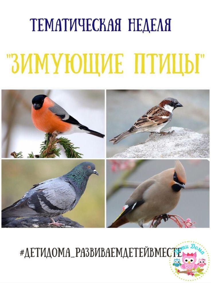 Тематический материал «Зимующие птицы». | Дети Дома