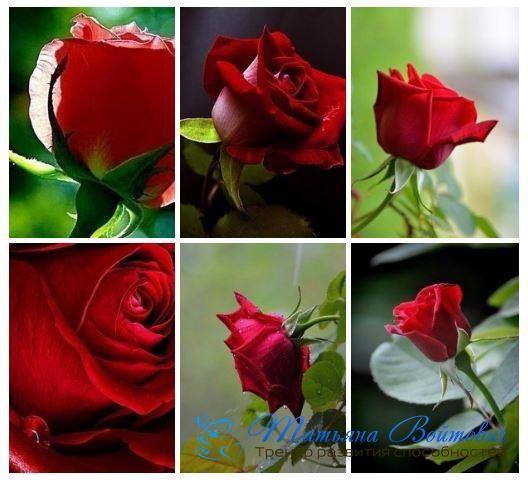 Внимание – это энергия. То, на что Вы обращаете свое внимание, изменяется. Например, Вы ухаживаете за любимым цветком, и он становится еще красивее. Вы перестали за ним ухаживать – цветок засох.   То, на что Вы обращаете свое внимание, становится в Вашей жизни больше. Вы дарите свою энергию происходящему с Вами хорошему событию, тем самым увеличивая вероятность того, что подобных событий в Вашей жизни будет больше. Здесь работает один из духовных законов Вселенной – Закон Притяжения.   При…