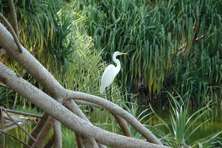 At FairchildButterflies, Awesome, Florida, Fairchild, Birds