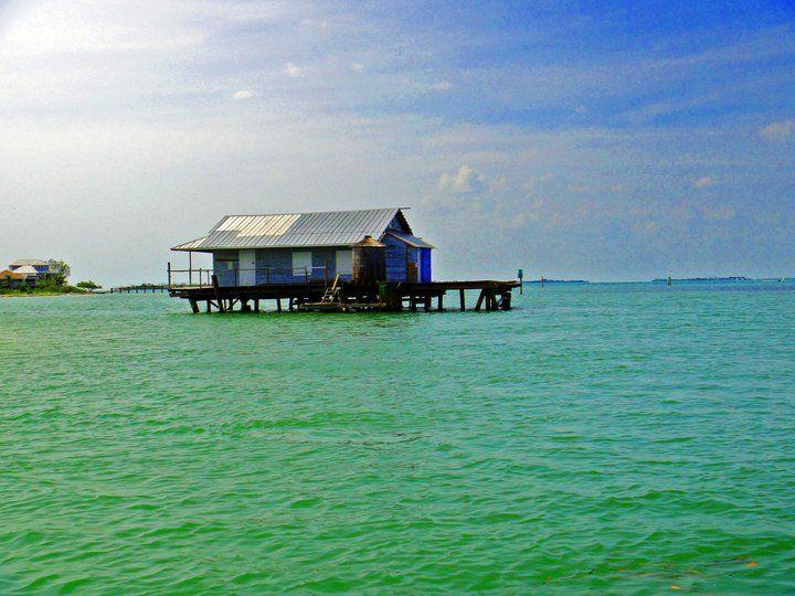 76 best images about anna maria sanibel captiva islands for Sanibel fish house