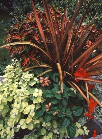 43 best images about thriller spiller filler on pinterest for Good filler plants for landscaping