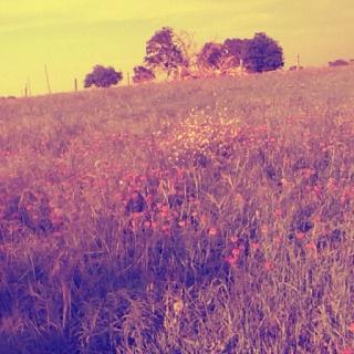The farm<3