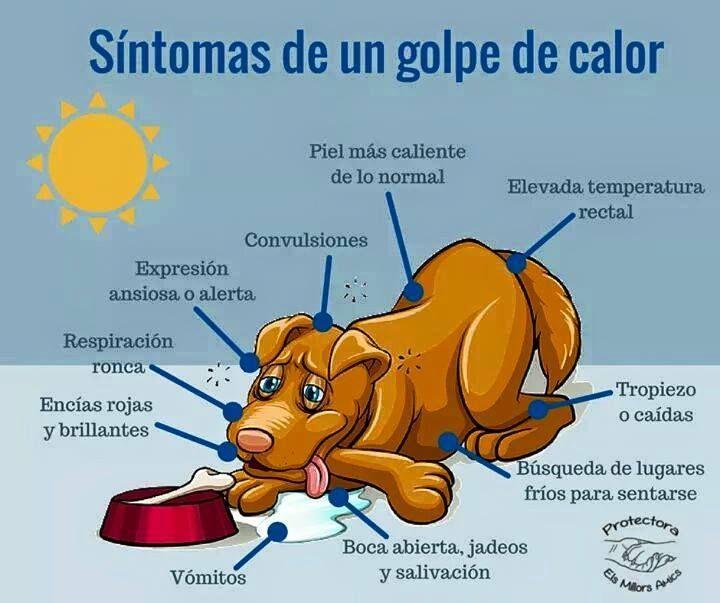 Evita los golpes de calor en tu perrito: https://soyunperro.com