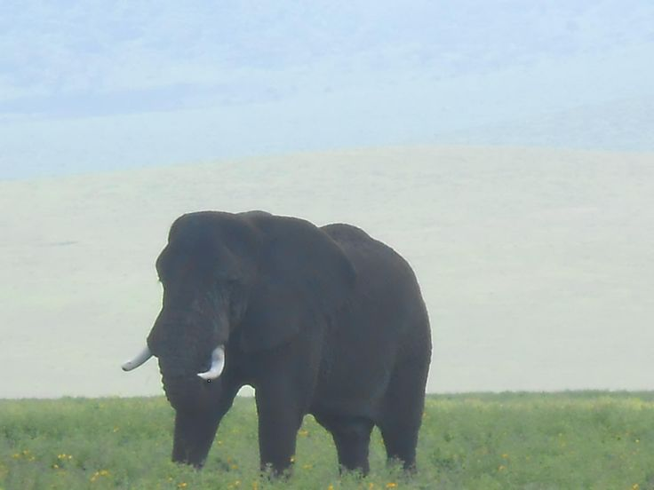 Male Elephant, Ngorongoro Crater Conservation Area, Tanzania