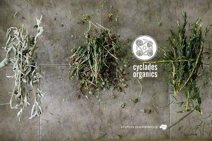 Φασκόμηλο, θυμάρι, δενδρολίβανο sage,thyme,rosemary http://www.cycladesorganics.gr/en/