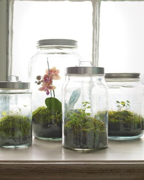 love this idea...little miniature greenhouses