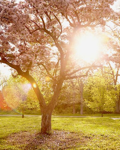 Spring Shine, Nature Photography