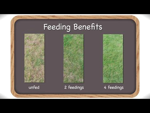 When To Apply Weed and Feed-Complete Year Round Guide