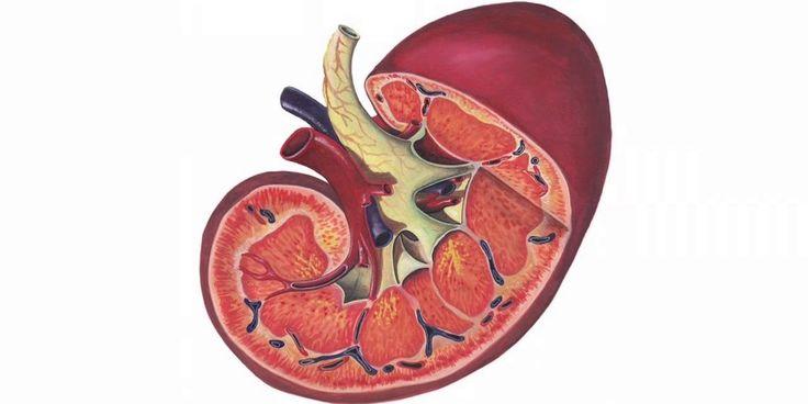 9 tipů, jak zbavit ledviny toxinů