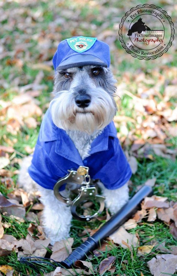 Remington Schnauzer made Buzzfeed again - this time for his amazing marketing abilities for The Paw Wash. Click here to see 27 other ingenious products that your dog may love too.Remington is not just your ordinary dog. He is a Schnauzer with a 'tude and knows how to work his amazing beard,…