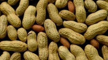 Estudio sugiere que el consumo de maní en la infancia puede prevenir alergias