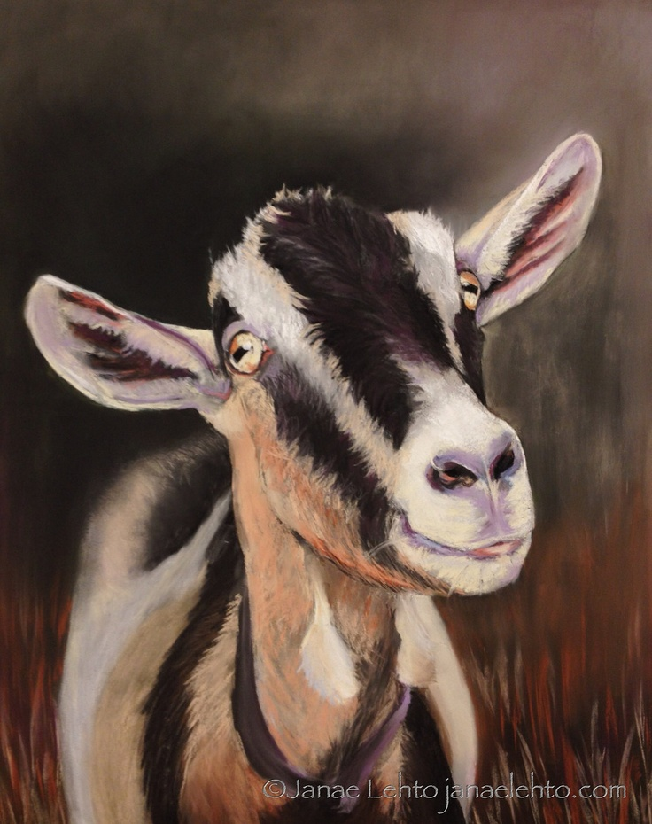 4 Cards with Envelope Male Alpine Goat by JanaeLehtoFineArt