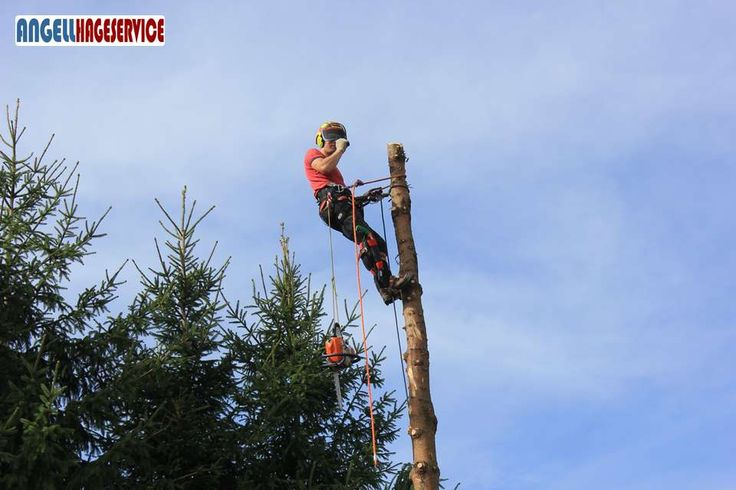 Trefelling - Angell Hageservice