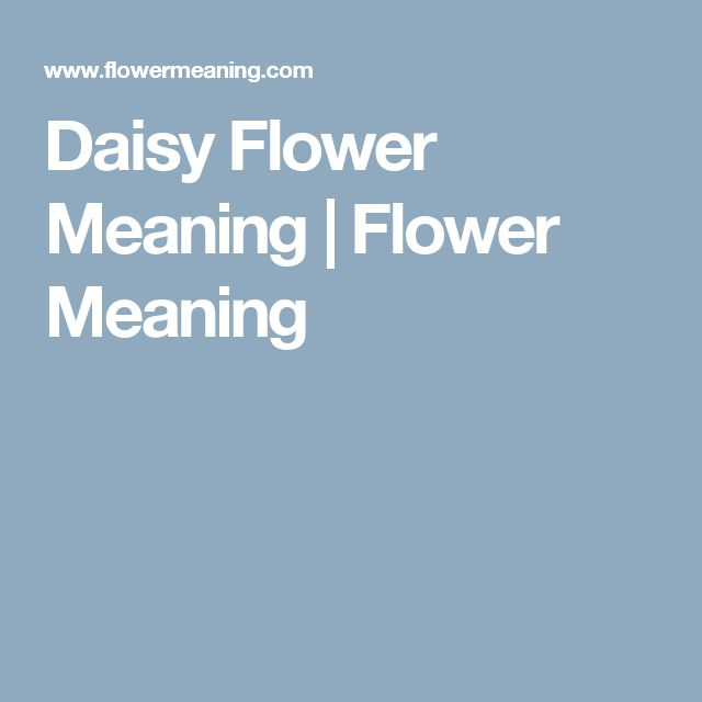 Daisy Flower Meaning | Flower Meaning