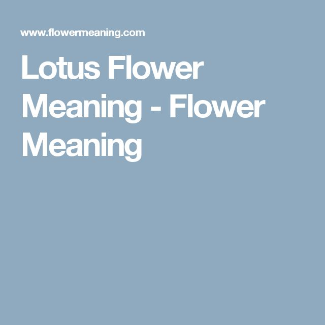 Lotus Flower Meaning - Flower Meaning