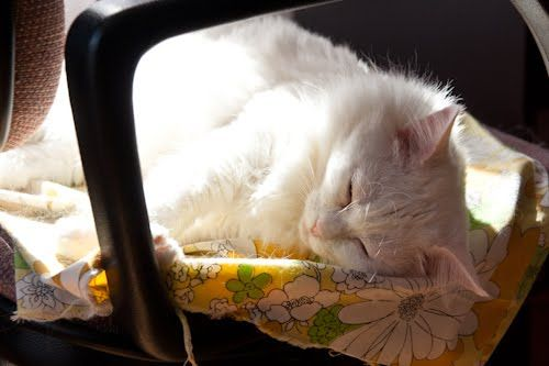 Life of a cat. Sleep + sunshine, what more would a cat want? :)