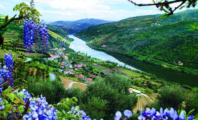 The Douro River Valley.  http://www.rouxwinetrips.com/port-wine-and-flamenco-river-cruise---october-2015.html