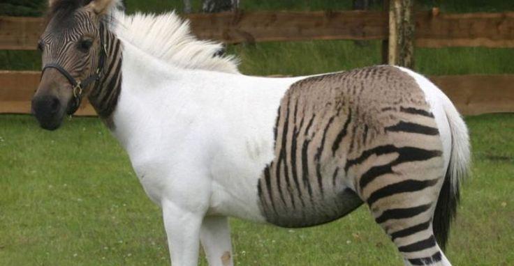 ¡Híbridos de animales que seguramente ni creías que podían EXISTIR!