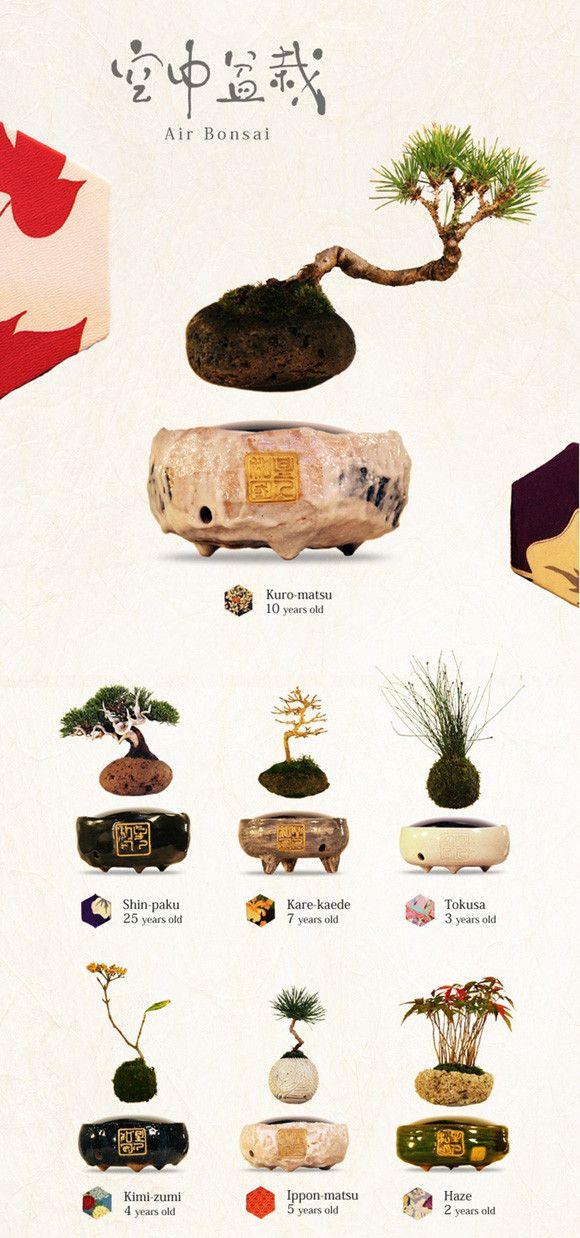 Aie Bonsai #japan